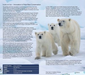 Arctic Map - Polar Bears and climate change