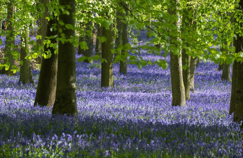 Bluebell Wood - environmental responsibilities