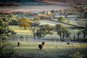 Country walking - sheep in a field