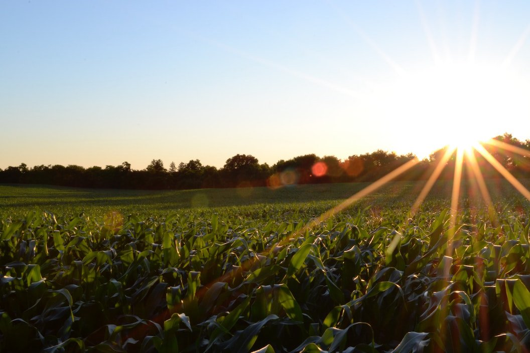 Local walks - crop field with sunset