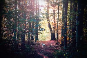 Dalmatian on a country walk - Get away from the crowds in the country